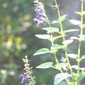 写真: お庭に咲く花