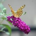 蝶がやっと来た庭で