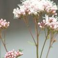 夢を見させてくれる花です