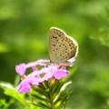 Photos: 蝶が来る庭