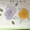 くんちゃんのバラ