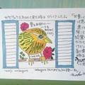 lovely  nabegoro さんのガビチョウ