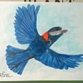 Photos: 夢が叶うまで140  羽を描く