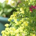 Photos: 夢49 おすすめのお花です