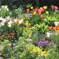 2019年春私の庭 1