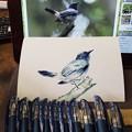 青いボールペンで鳥を描く