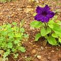 Photos: 空き地に咲く花