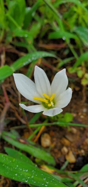 空き地に咲く花