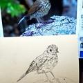Photos: 鉛筆画