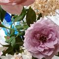 隣の家の薔薇