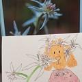 セリバオウレンの咲く季節