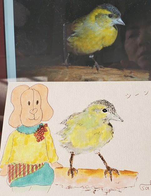 Photos: 舳倉島のマヒワ