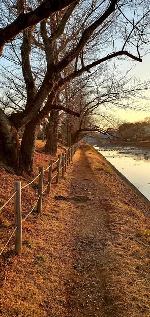 Photos: 浅川散歩