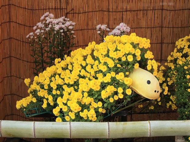 菊祭り 898A2480_R