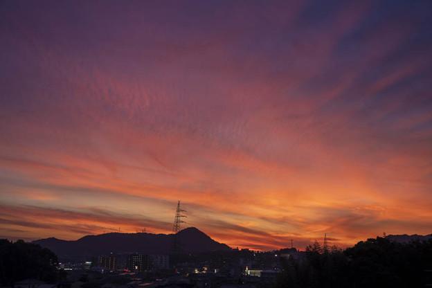 Photos: 夕暮れの華