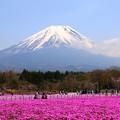 Photos: 富士芝桜祭り