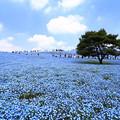Photos: ひたちなか 海浜公園