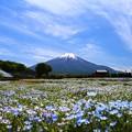 写真: 山中湖 花の都公園