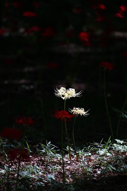 Photos: IMG_6140