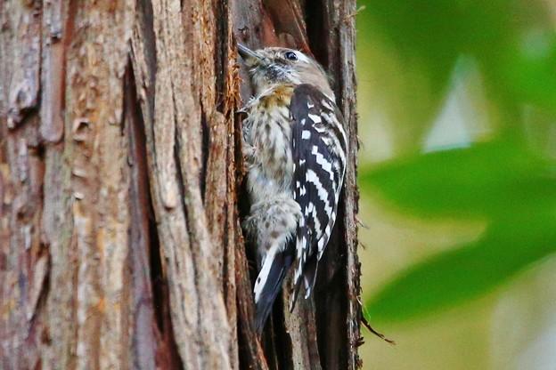 松戸 21世紀の森と広場にて鳥撮り