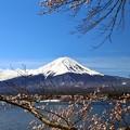 Photos: 河口湖からの富士山と桜