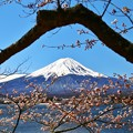 河口湖からの富士山と桜