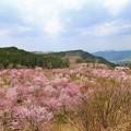Photos: 福島 裏磐梯・桜峠