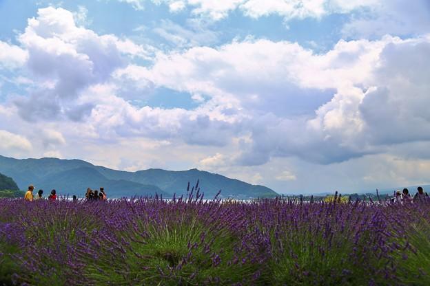 河口湖 大石公園の花たち