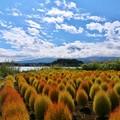Photos: 河口湖 大石公園にて 1