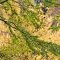 Photos: 松戸21世紀の森と広場にて その1