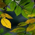 Photos: 松戸21世紀の森と広場にて その2