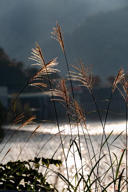荒川ダム(能泉湖)付近にて その1