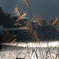 Photos: 荒川ダム(能泉湖)付近にて その1