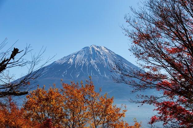 鳴沢村 紅葉台より望む富士山 その3