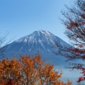 Photos: 鳴沢村 紅葉台より望む富士山 その3
