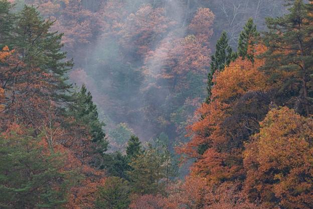 小雨の中の紅葉 その2
