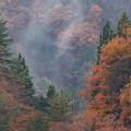 Photos: 小雨の中の紅葉 その2