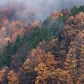 Photos: 小雨の中の紅葉 その3
