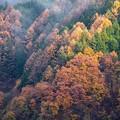 小雨の中の紅葉 その5