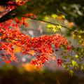 去りゆく秋を惜しむ その1