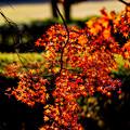 去りゆく秋を惜しむ その3