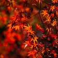 去りゆく秋を惜しむ その4