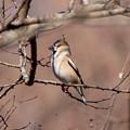 Photos: 今年初鳥撮り(翡翠以外の鳥)その1