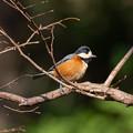Photos: 今年初鳥撮り(翡翠以外の鳥)その3