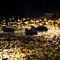 金色の中のシルエット