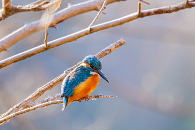 Photos: 今月最初の鳥撮り(1/7)