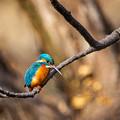 Photos: 今月最初の鳥撮り(2/7)