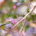 Photos: 今月最初の鳥撮り(4/7)