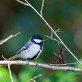 Photos: 今月最初の鳥撮り(5/7)