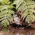 Photos: 今月最初の鳥撮り(6/7)